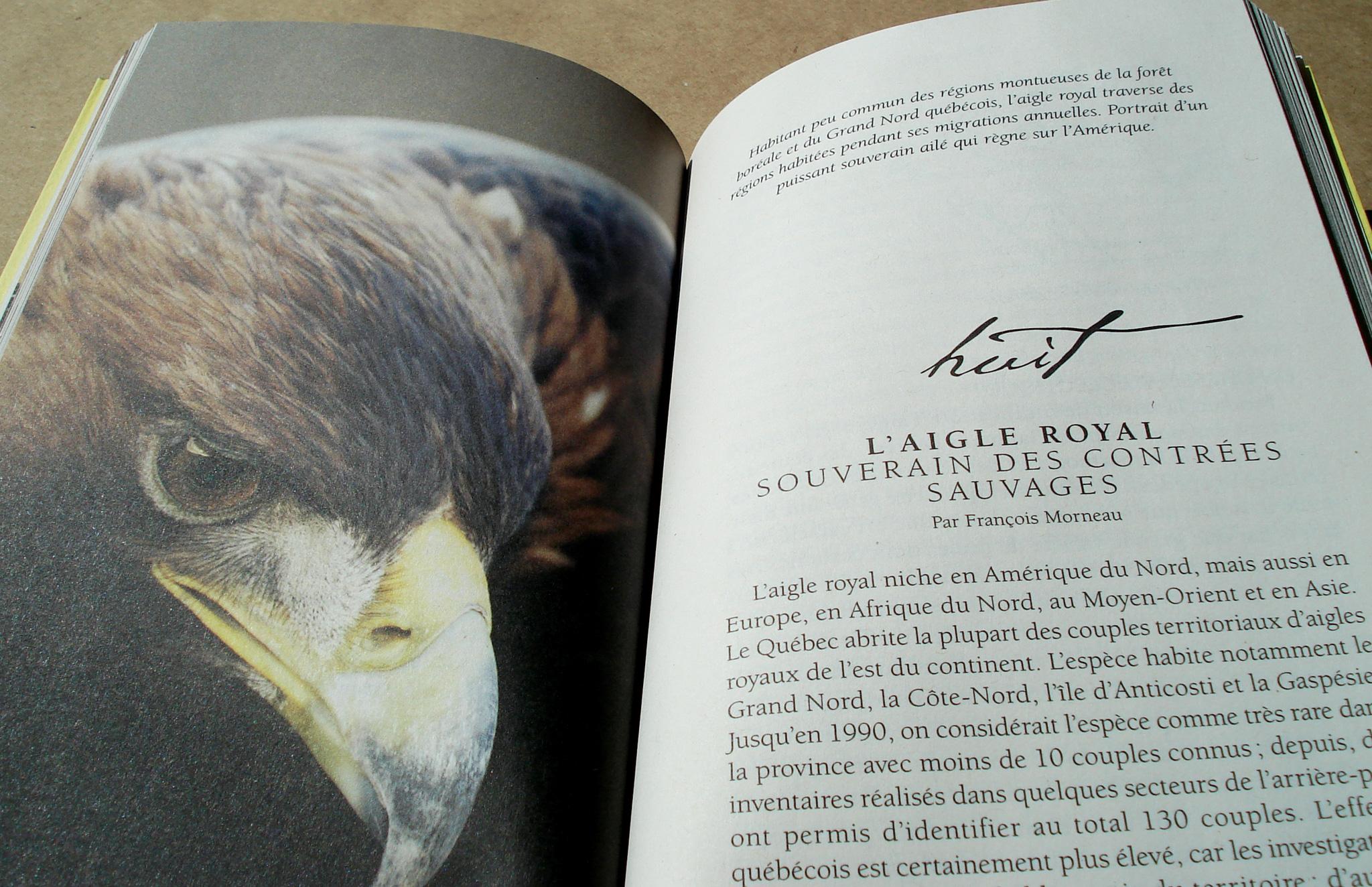Grille graphique pour livre de poche À vol d'oiseau d'Orinha Média.