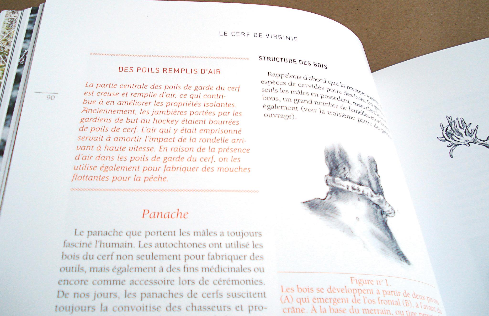 Visuel illustratif et grille graphique pour un livre de référence Sur la piste de nos cervidés d'Orinha Média.